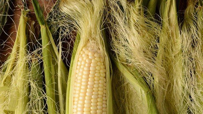 gambar rambut jagung