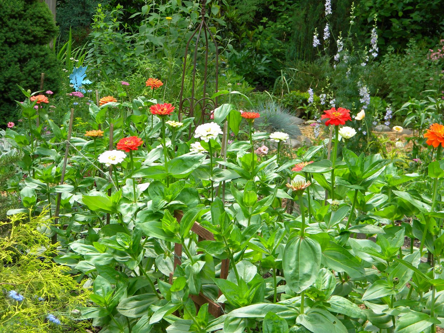 Growing Zinnias From Seed