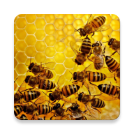 Apiary Book site