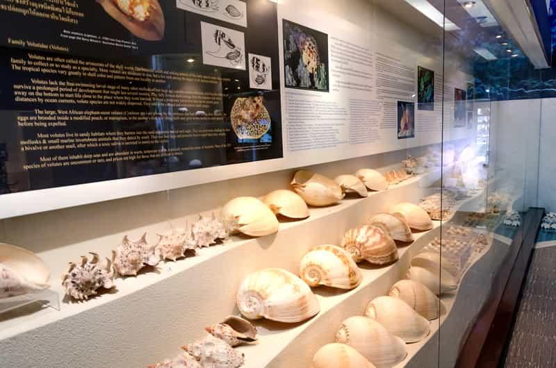 Shell Museum Diu, India