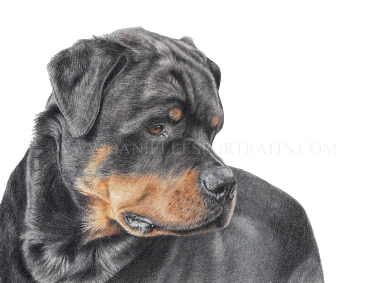 03-Rocco-Danielle-Fisher-Realistic-Pet-and-Wildlife-Portraits-www-designstack-co