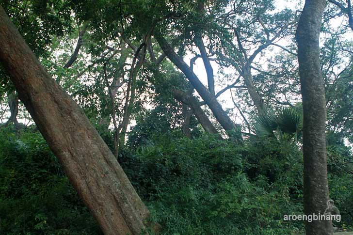 hutan kalijaga cirebon