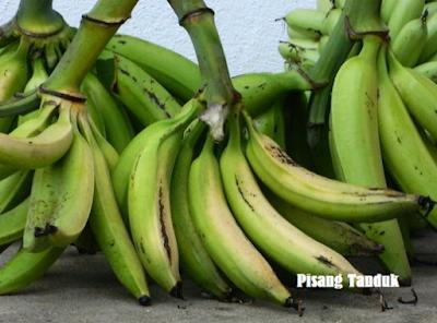 buah pisang pisang tanduk unggul bibit pisang tanduk jual bibit pisang tanduk tanaman pisang tanduk budidaya pisang tanduk