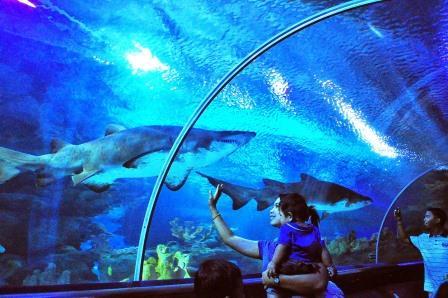 Objek Wisata Favorit di Kuala Lumpur Malaysia Aquaria KLCC