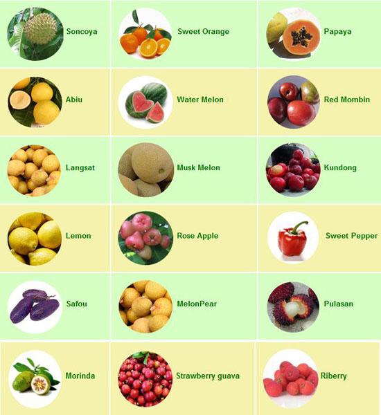 Exotic Fruits List | www.pixshark.com - Images Galleries ...