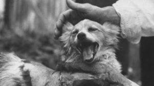 Τα Άκρως Απόρρητα Σοβιετικά Πειράματα Που Βγαίνουν Στην Δημοσιότητα – Επιστήμονες Επανέφεραν Σκύλο Στη Ζωή! (Video)