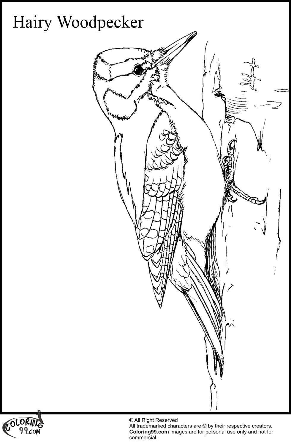 woodpecker coloring pages - photo#9