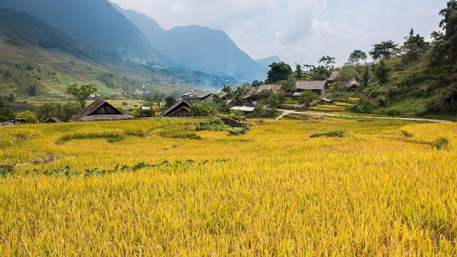 Yellow Paintings in Hoang Su Phi 2