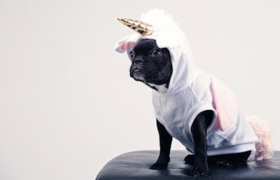 A small black and white dog is wearing a unicorn costumer