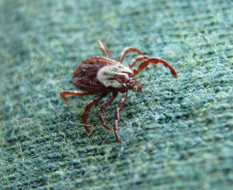 backyard critter watch: Ticks tick me off