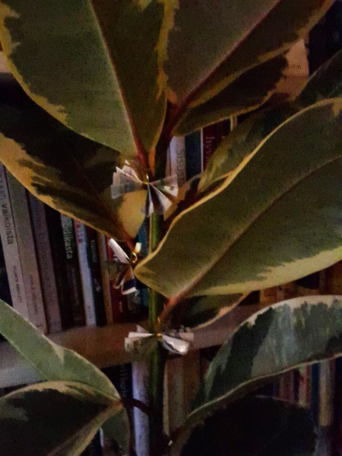 lettujen paistaminen oliiviöljyssä