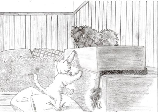 Kätzchen beim Geschwisterzank
