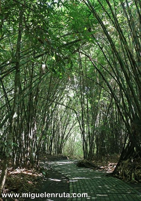 Hutan-Bamboo-Forest-Penglipuran