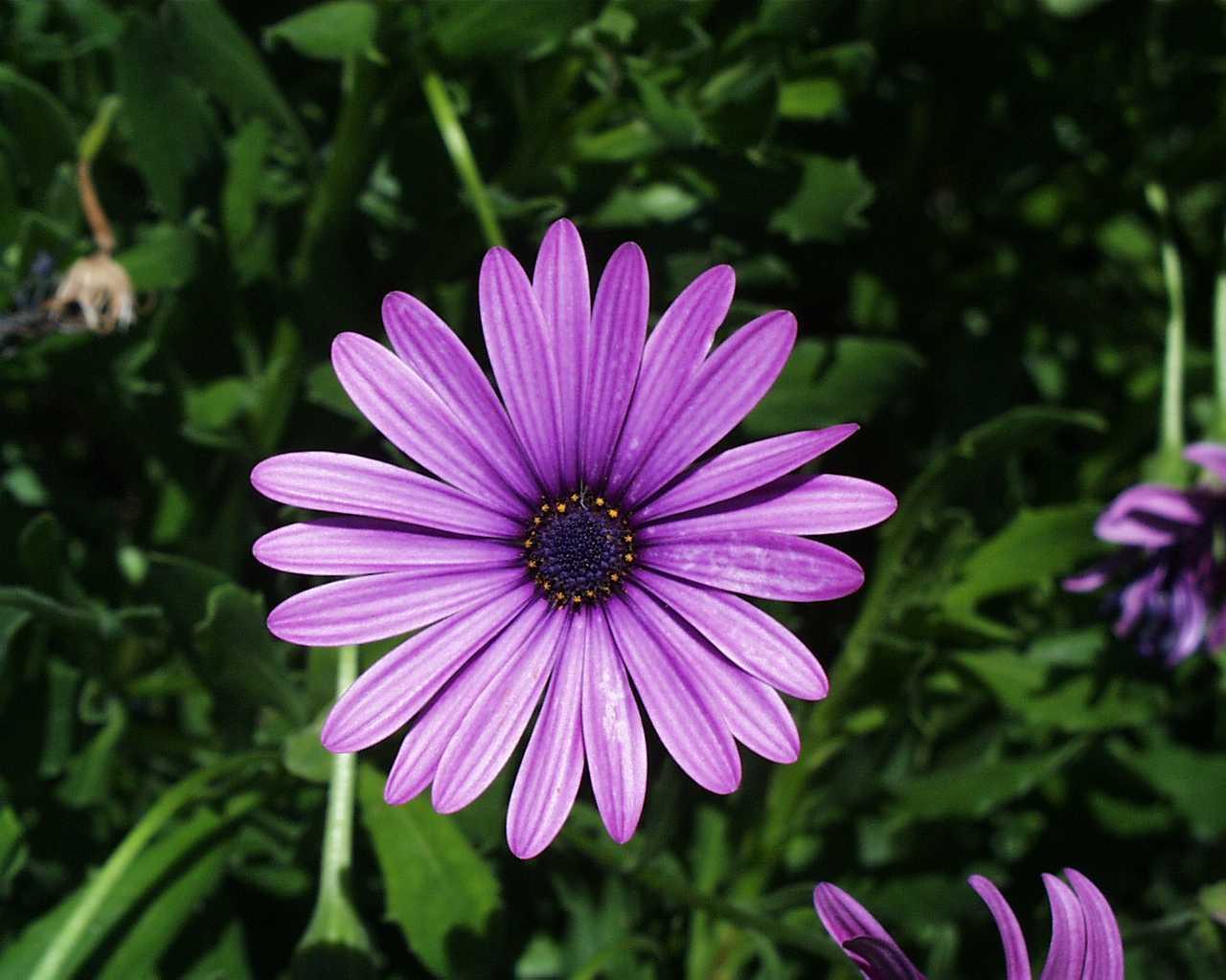 flowers for flower lovers.: Daisy flower wallpapers.