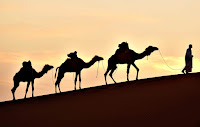 Man walkig camels in desert (Credit: http://total-management.com) Click to Enlarge.