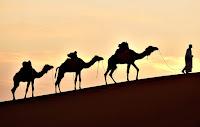 Man walkig camels in desert (Credit: http://total-management.com) Click to Enlarge.
