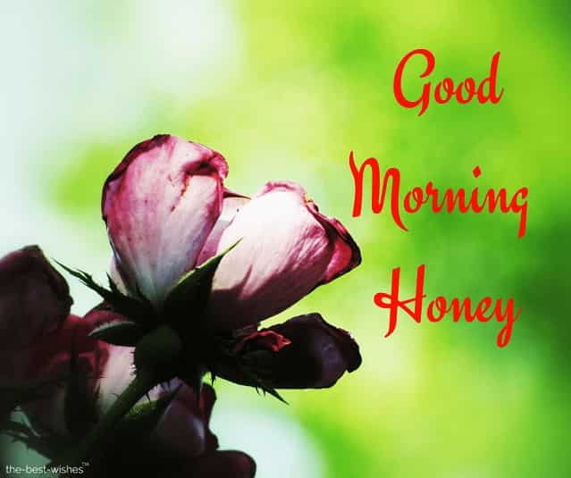 good morning honey rose