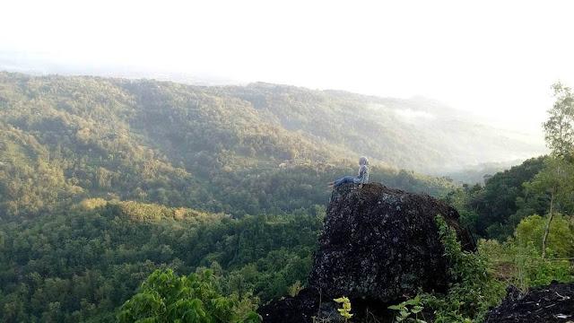 watu ngadeg di hutan pinus pengger