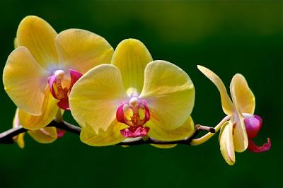 Orchid Gardens Nagoya.