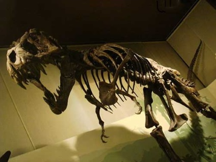 Can carbon dating be used on dinosaur bones in texas