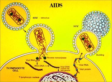 Bagaimanakah Virus HIV Menginfeksi Manusia? Ini dia Jawabannya