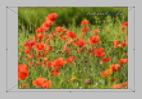 Mengubah ukuran gambar saat Placing - Cara Mengganti Background Foto menggunakan Photoshop - Topikramdani.com