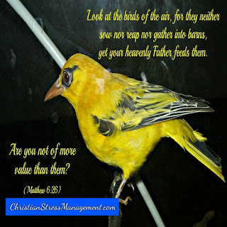 Look at the birds of the air for they do not sow or reap or gather into barns and yet your Heavenly Father feeds them. Are you not more valuable than them? (Matthew 6:26)