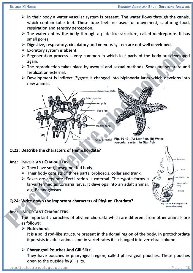 Kingdom Animalia - Short Questions Answers - Biology XI