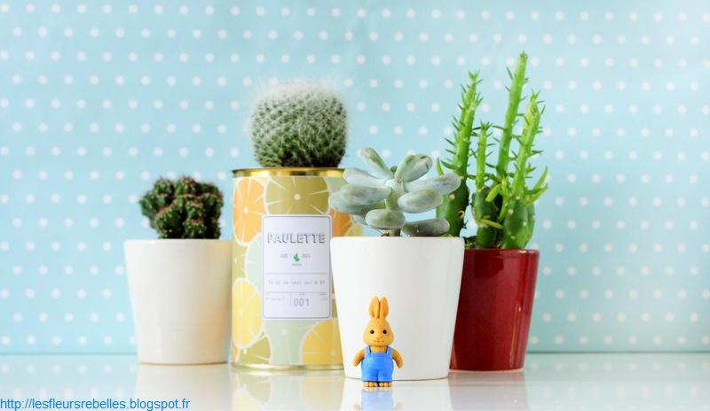 d co mes cactus mes petites plantes grasses et ludwig. Black Bedroom Furniture Sets. Home Design Ideas