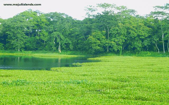 Rawanapara Pond Of Majuli Island