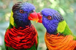 Daftar Harga Burung Nuri Terbaru Terbaik di Pasaran