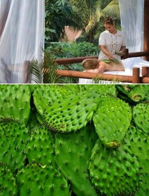 pijat dengan menggunakan kaktus