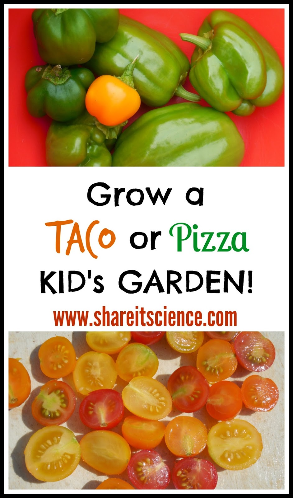 grow a taco or pizza kids garden and seed giveaway - Pizza Garden