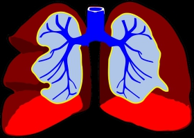 Picture of animated lungs.