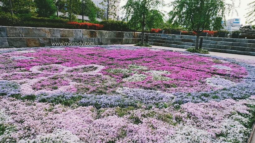 pink moss in tokyo japan