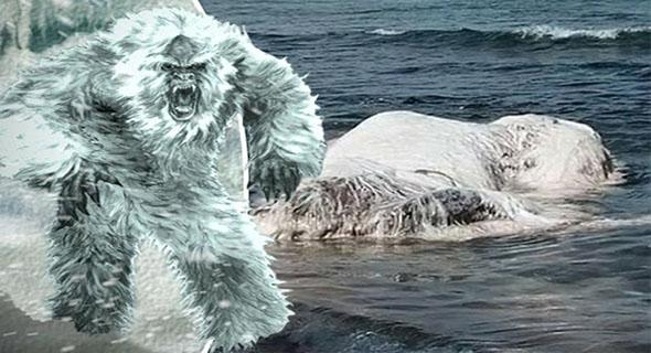 Globster, Monster Misterius Yang Ditemukan Di Pantai San Antonio Gloria