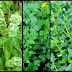 Medicinal Herbs You Need To Grow In Your Own Backyard
