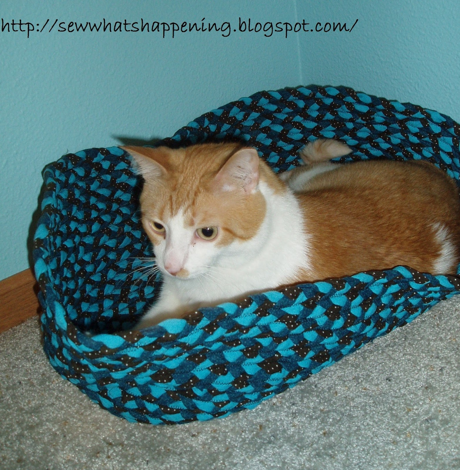 Dog Chewed Up Rug: Sew What's Happening?: Braided Pet Bed