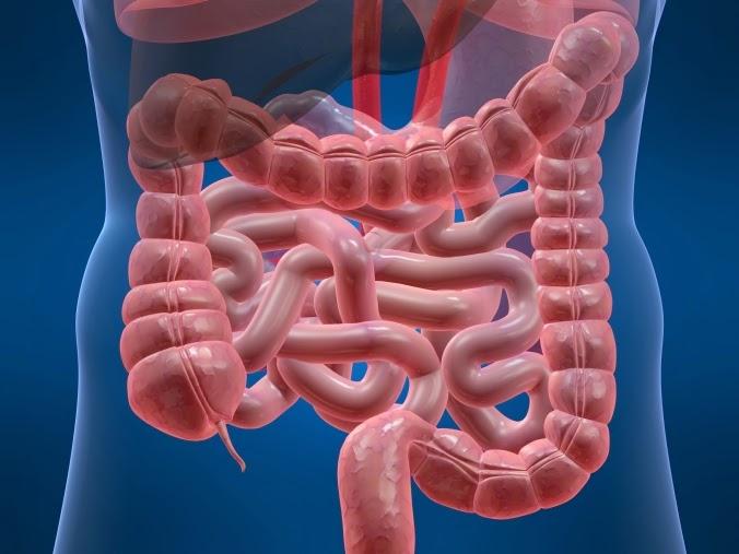 Síndrome Del Intestino Irritable-Controla Sus Síntomas Con Estos Tratamientos