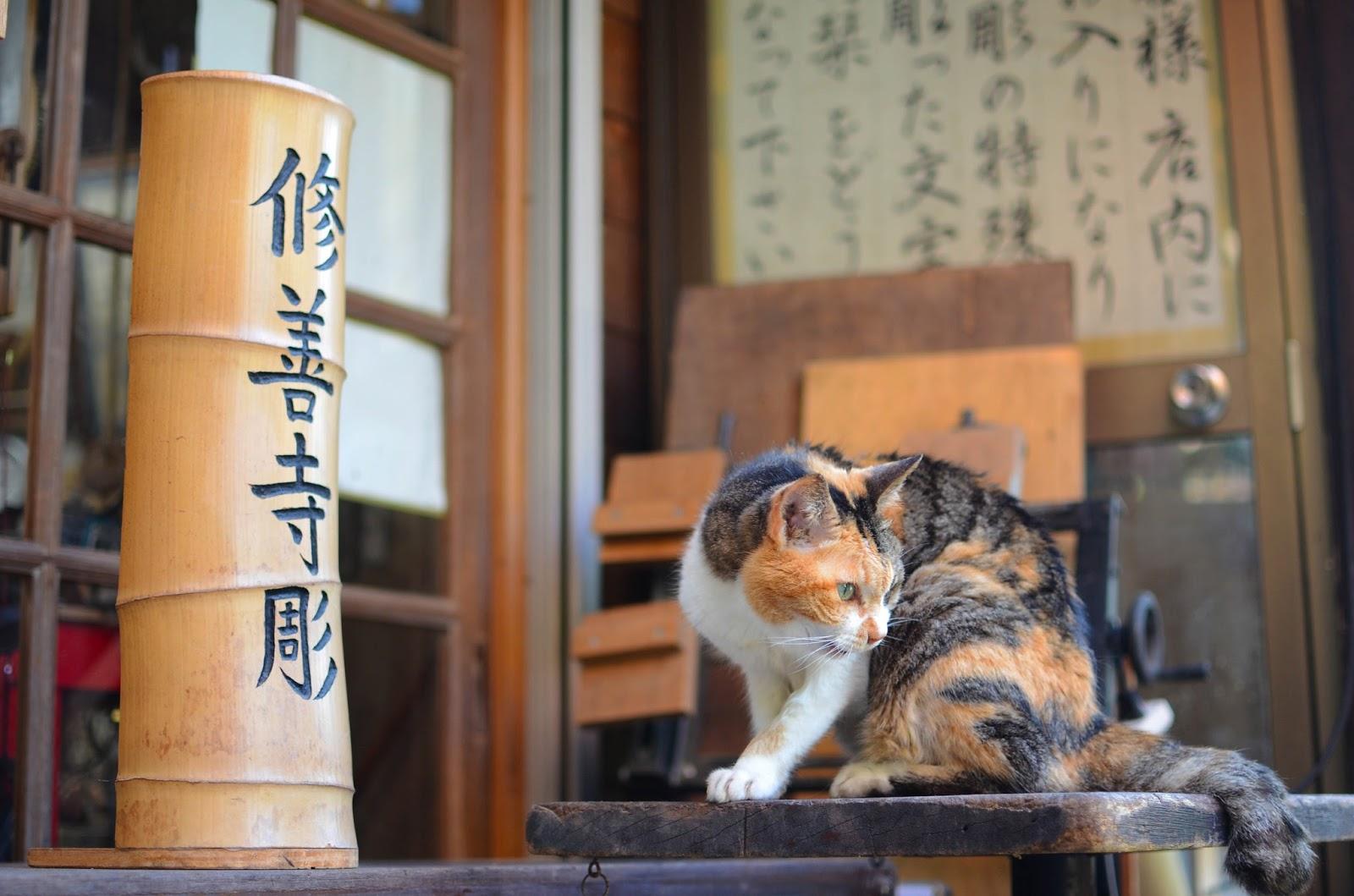修善寺悠閒一天遊 感受伊豆裡的小京都