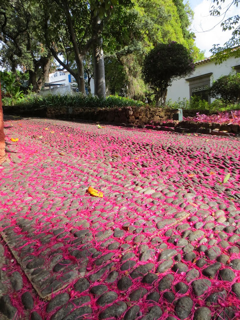 pink ground in Museu Quinta das Cruzes