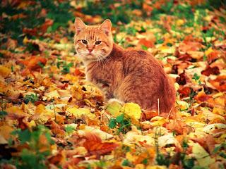 Μερικά πράγματα που μου αρέσουν το Φθινόπωρο