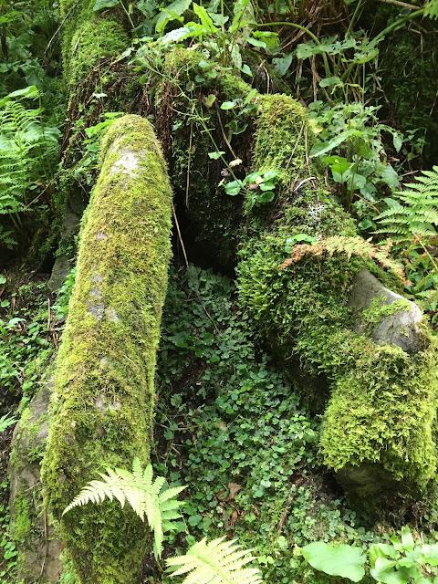Mit Moos überwachsene Baumstämme