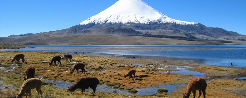 Cencientecno chile y el turismo norte de chile for Piletas publicas en zona norte
