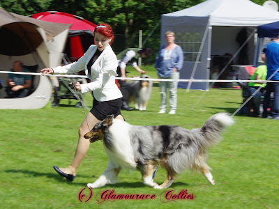 Huge succes for team Glamourace Collies in Bottrop