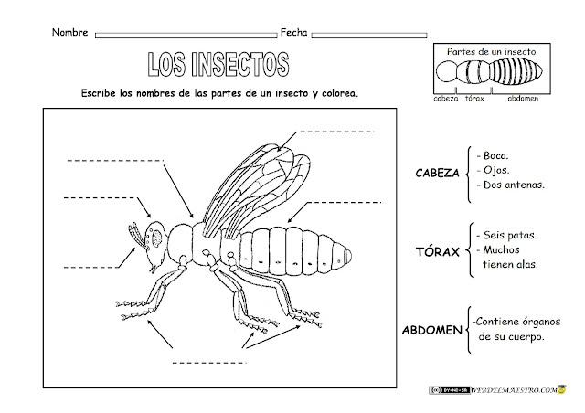 Ciencias Naturales 1 Oja Insectos