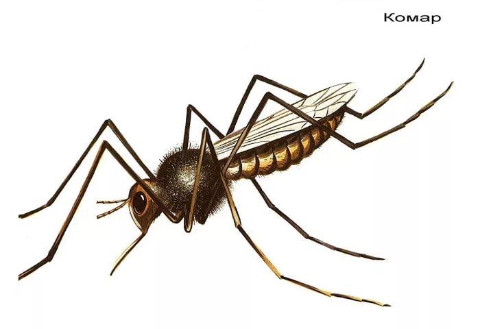 картинка комара и жука комбинированного домика