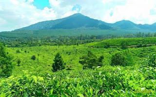 Wisata edukasi kebun teh lembang