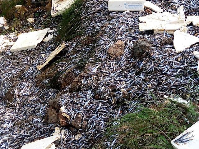 Ασυνείδητος πέταξε 1 τόνο ψάρια στο δάσος της Ηγουμενίτσας (ΦΩΤΟ + ΒΙΝΤΕΟ)
