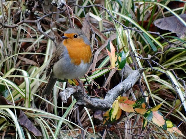 les visiteurs à plumes sauvages - 3 - Page 4 DSC09165